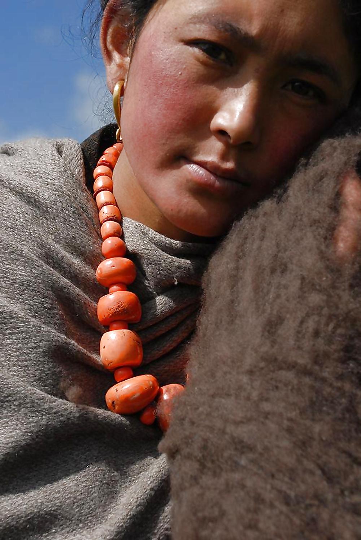 Tibetan penis
